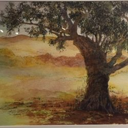 Plein Air Presentation, Honorable Mention - Diane Moore - 100 yr Old Olive